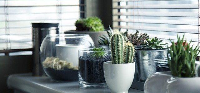 Raamdecoratie: tips &  tops